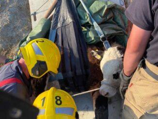 charmouth fire crew calf