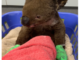 cubs koalas