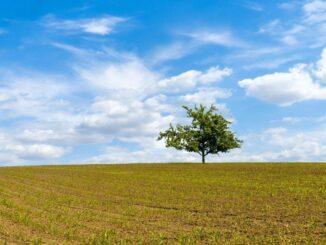 tree-awareness-week