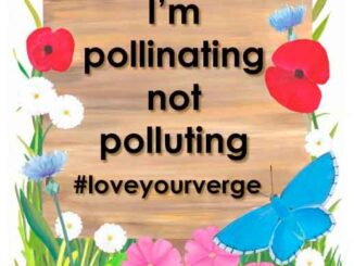 #LoveYourVerge campaign
