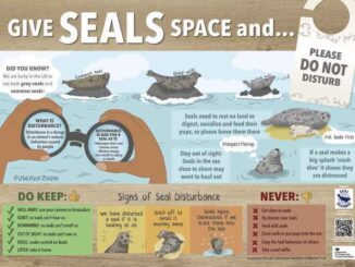 Give Seals Space