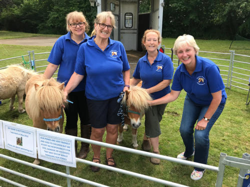 Munchkins Miniature Shetland Rescue, from Southleigh